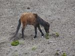 Day 02 - Wild Horse at Cotopaxi